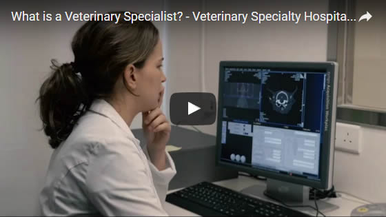 Watch Video - What is a Vet Specialist
